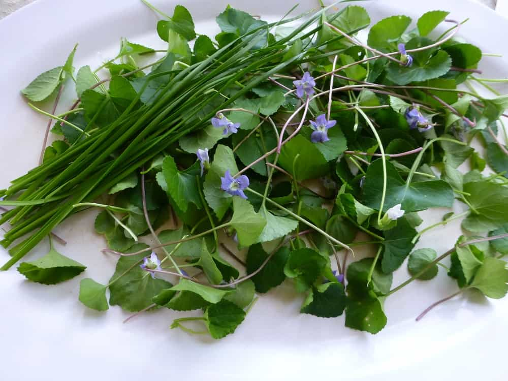 violet-and-meadow-garlic-pancakes-2