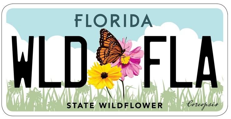 Revised Florida license plate showing flowers of Coreopsis leavenworthii (Leavenworth's tickseed) and Coreopsis nudata (Georgia tickseed)