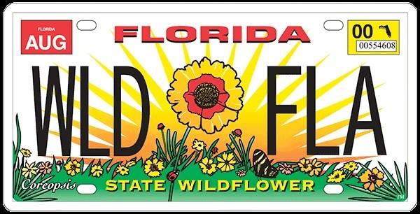 Florida license plate showing a Coreopsis tinctoria