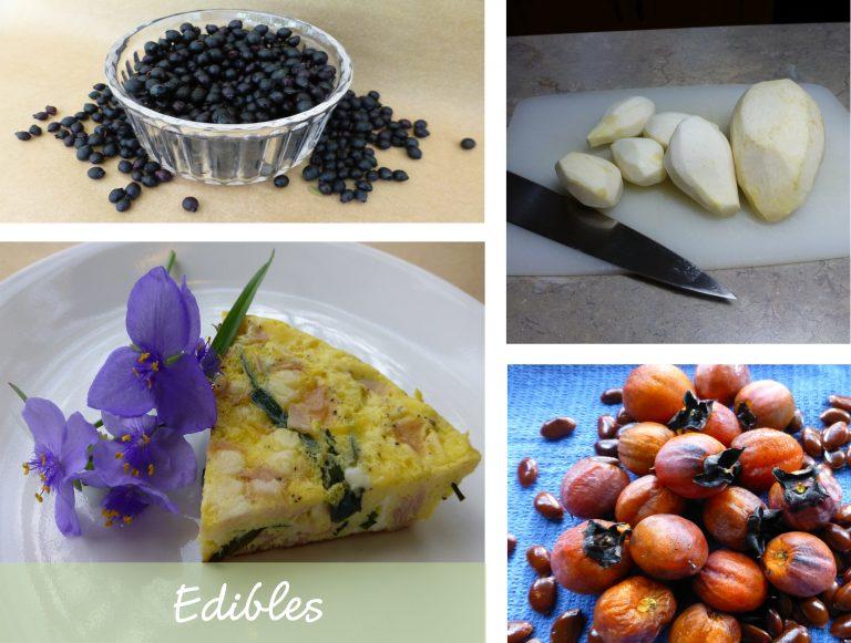 sharons florida edibles link box