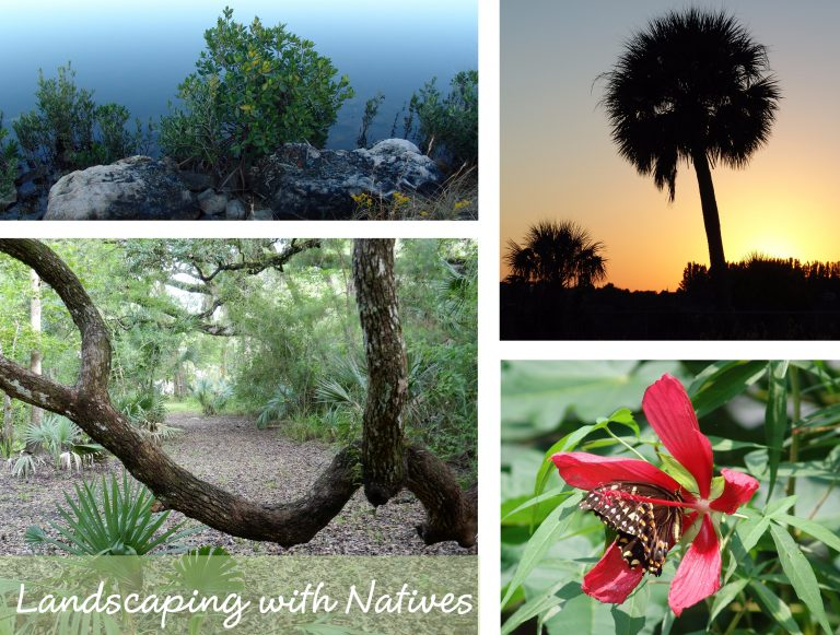 sharons florida landscaping with natives main page link