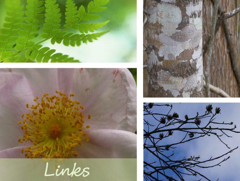 sharons florida links collage main page