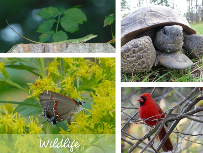 sharons florida wildlife main page link collage