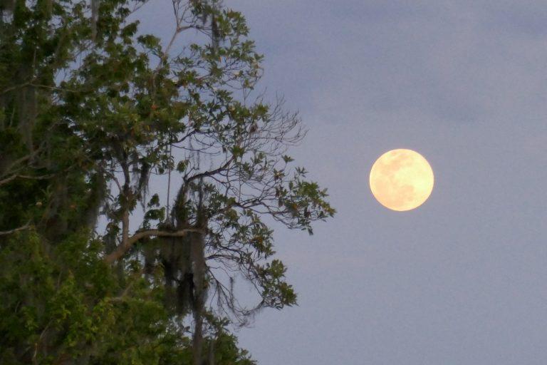 Florida Moon Garden