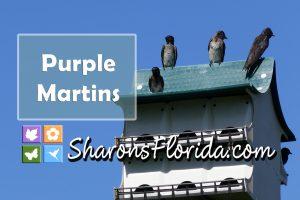purple martins sitting on a martin house