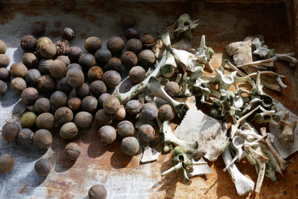 whole hickory nuts and small bones for squirrels to chew on