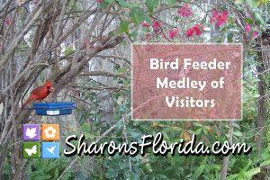 screen shot of a video of bird feeder medley of visitors
