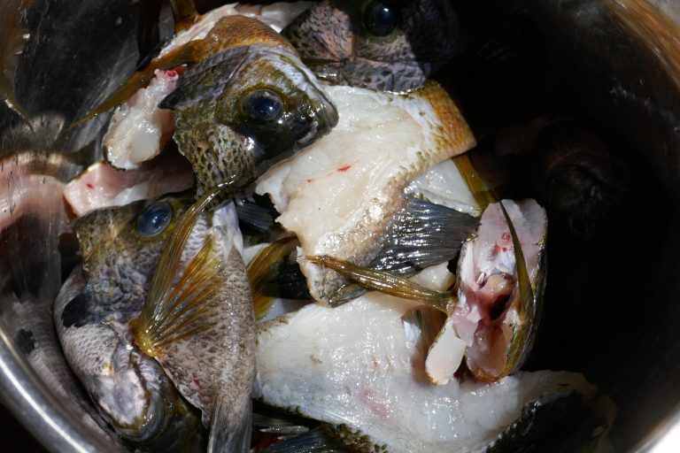 a large cooking pot filled with fish heads and backbones to make soup
