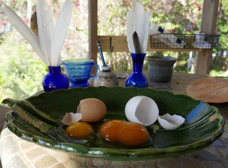 a chicken egg and a Pekin duck egg comparison