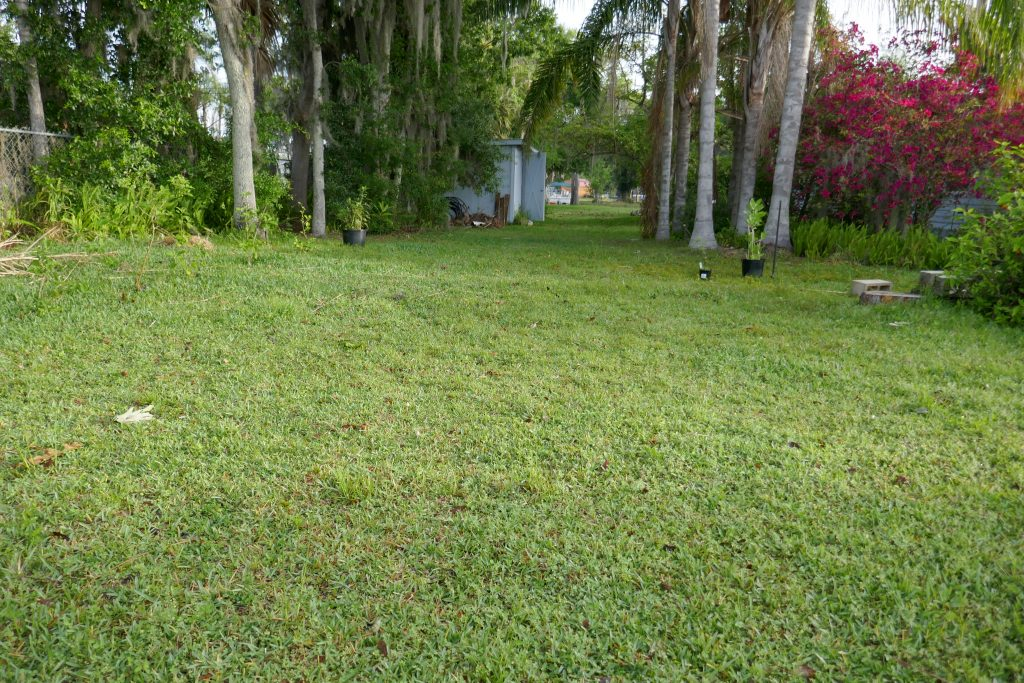 backyard facing roadway with palms