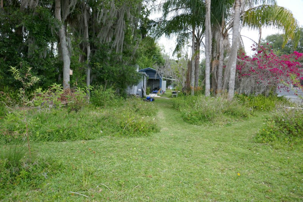 backyard facing roadway with palms after natives allowed to grow