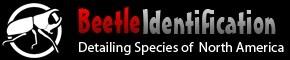 beetle identification site logo